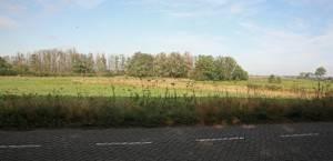 De bomenrij markeert de (veel) vroegere scheepvaartroute over de Schelde. Dit is nu midden in de polder